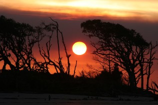 Live Oak Sunset