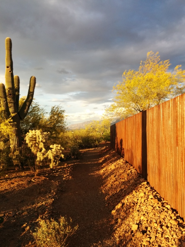 Our fence in the late afternoon April sun—Tucson, Arizona.
